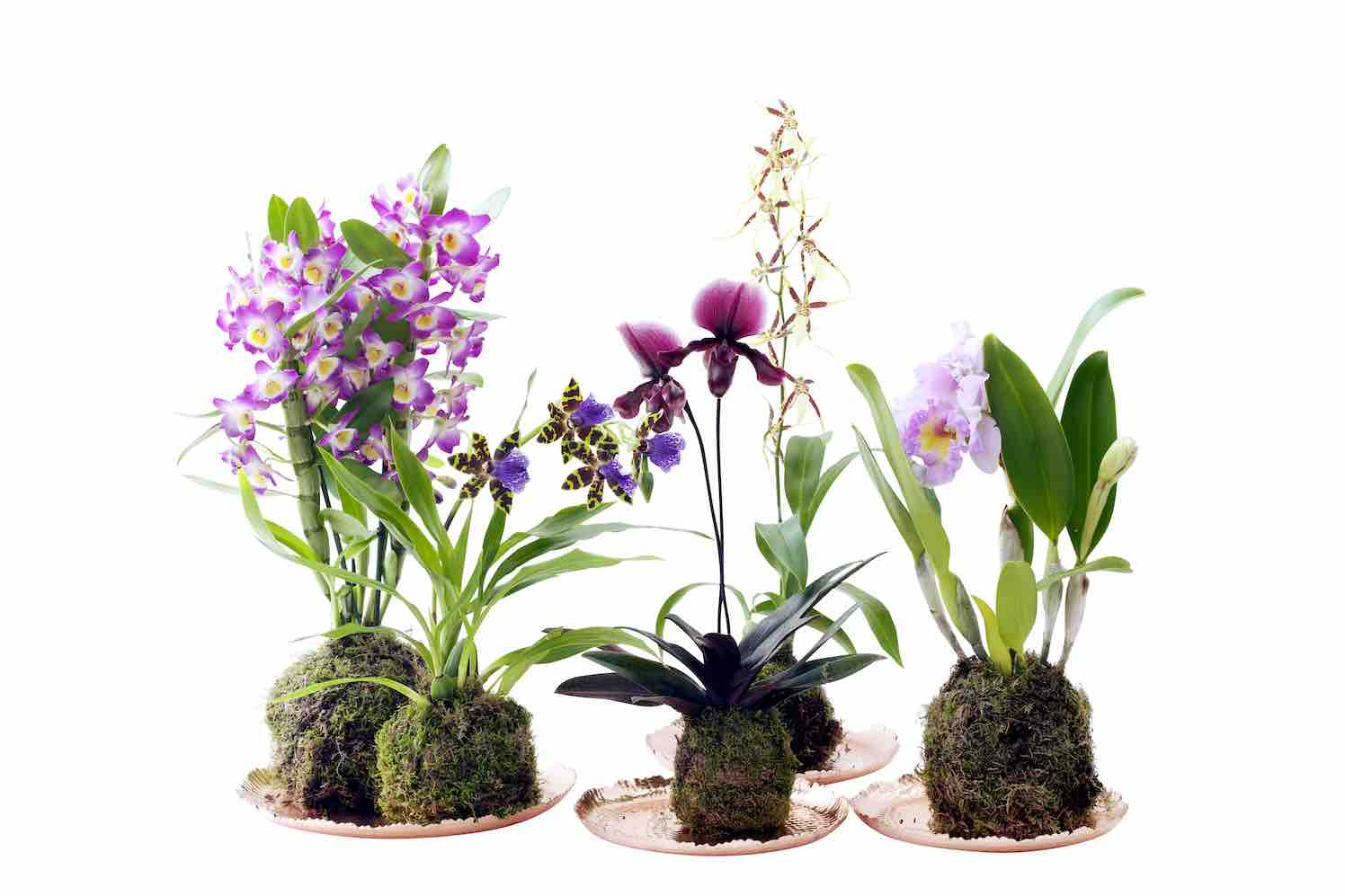 internationale dag orchidee