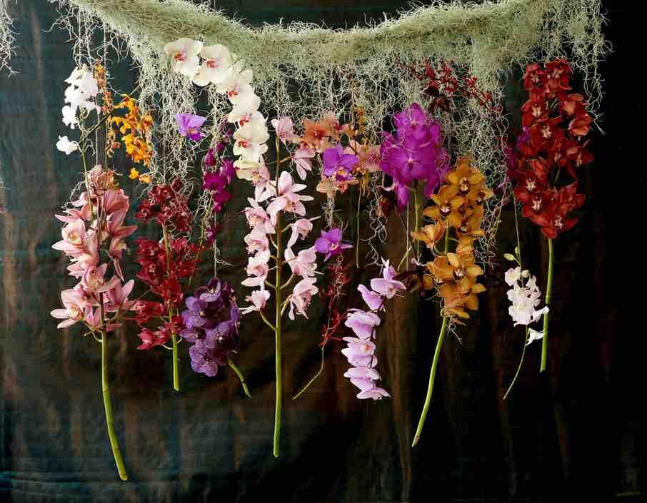 internationale dag van de orchidee