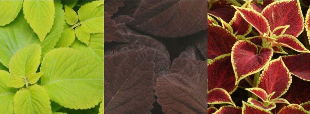 sierbladplanten
