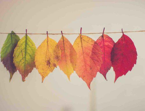Vergeten tuinseizoen… onterecht… benut het najaar