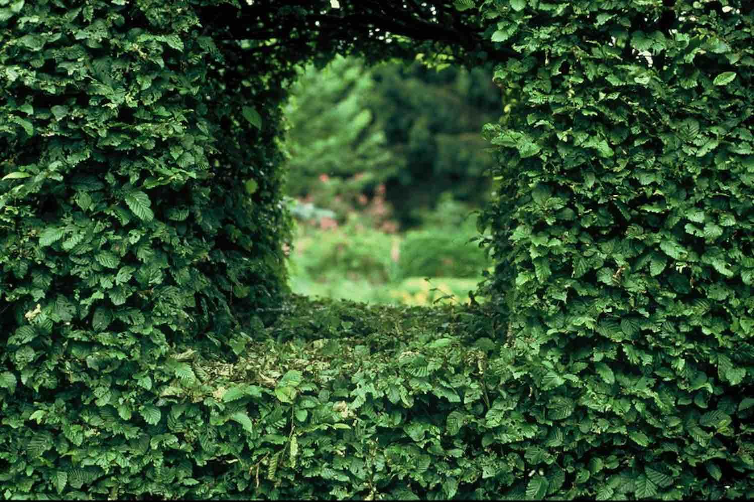 planten_kleigrond