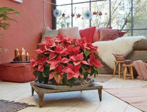 12 kerststerren stylingsideeën voor fijne feestdagen