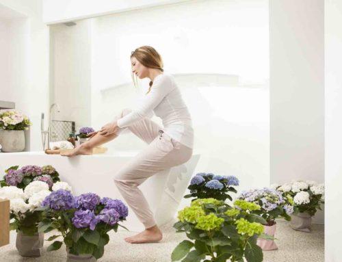 Een nieuwe badkamer vraagt om badkamerplanten