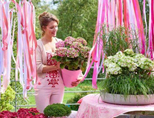 Vrouwenbladen zijn het succes achter de tuintrends