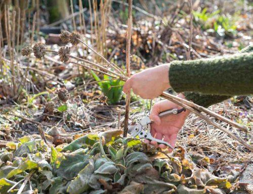 3x tuinonderhoud vaste planten border