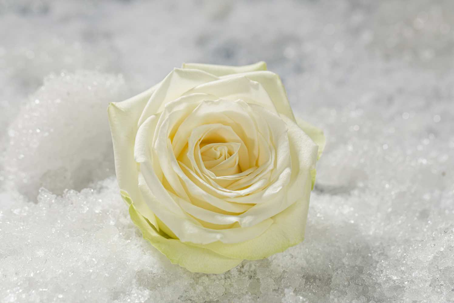 roos snowstorm