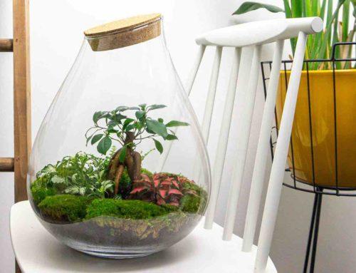 Plantenterrarium als mini-ecosysteem