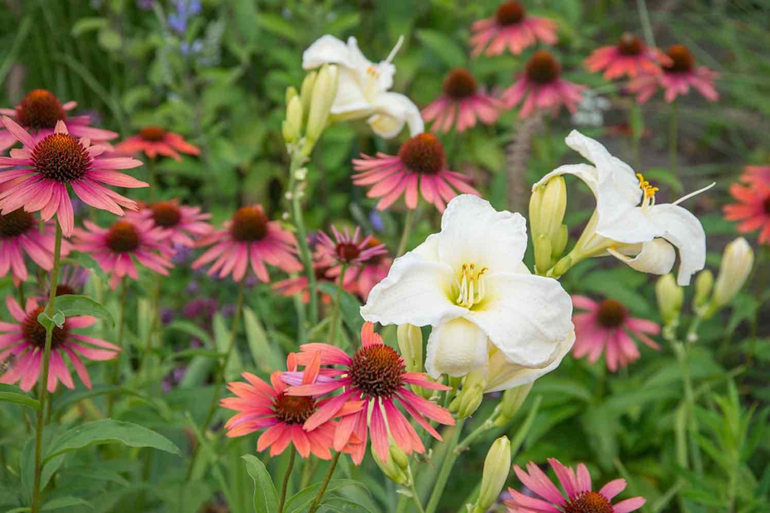 8 bloeiende tuinplanten