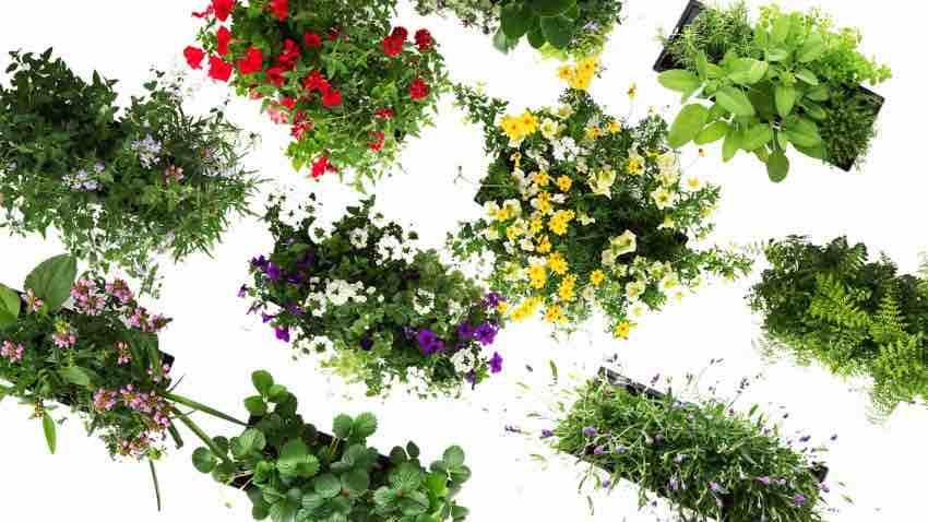 plantenabonnement