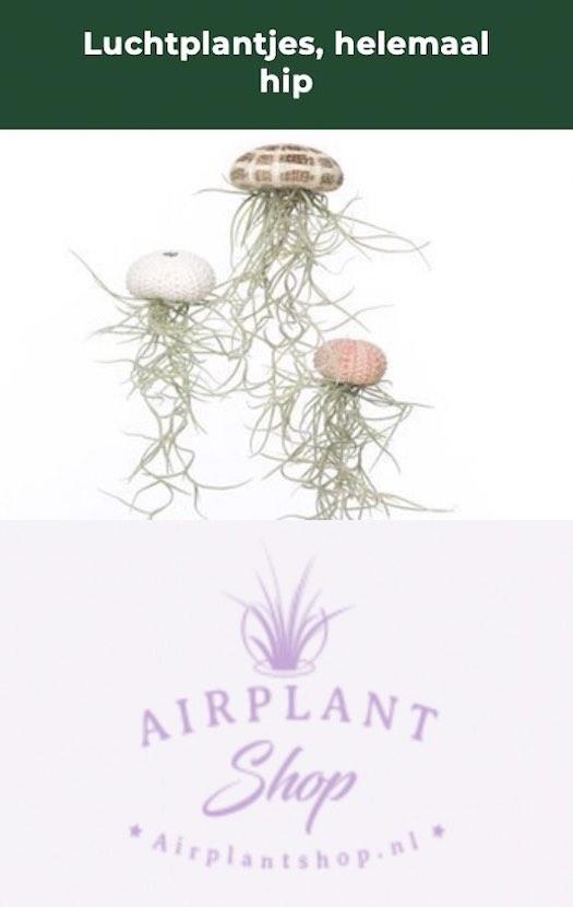 airplantjes