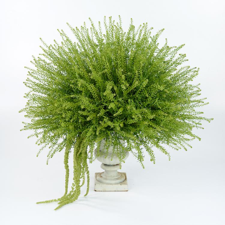 greendragonlepidium