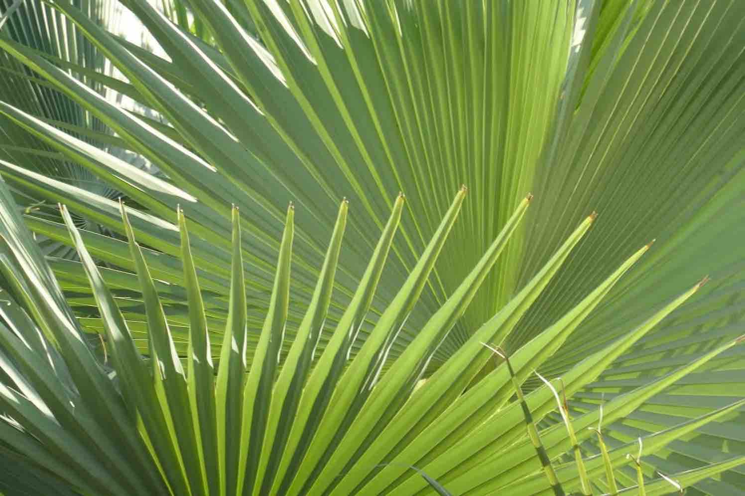 palmen exotisch