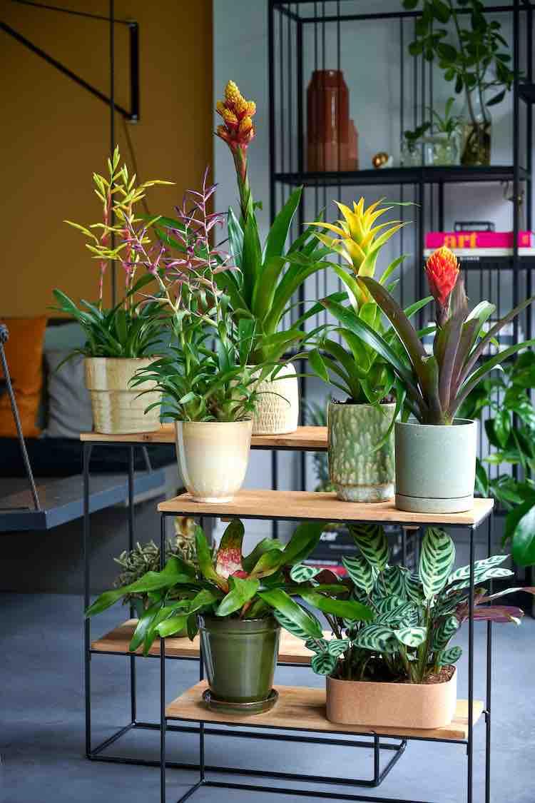 exotische woonplanten