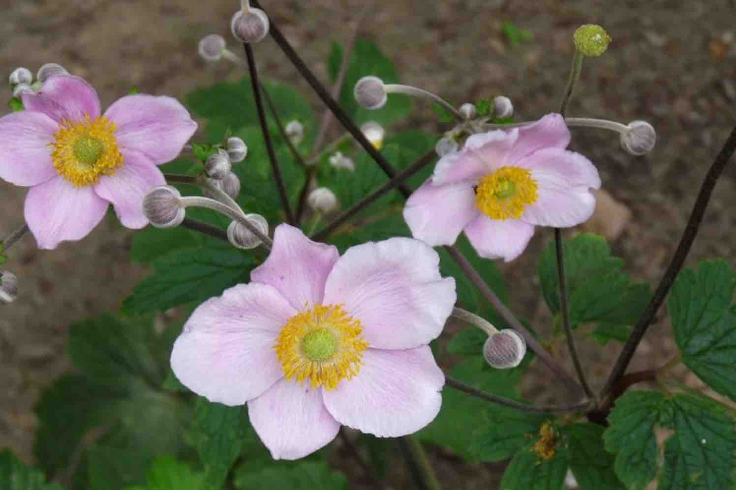 11 populaire herfstplanten