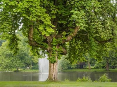 boom van het jaar