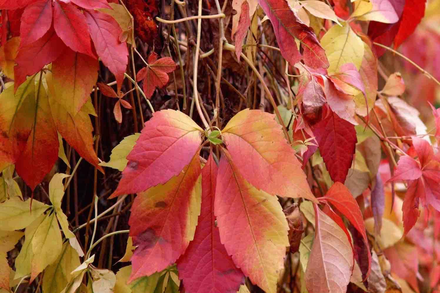 5 tips om jouw tuin herfstklaar te maken